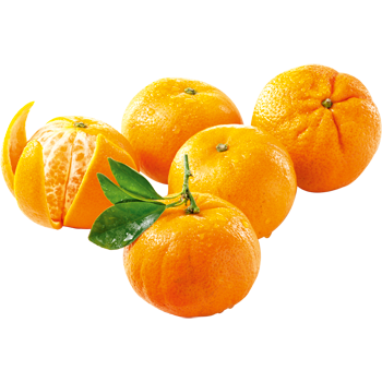 Spanien - Blatt-Mandarinen