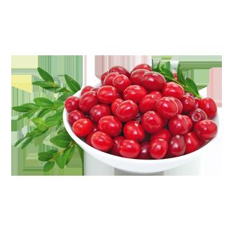 USA - Cranberrys