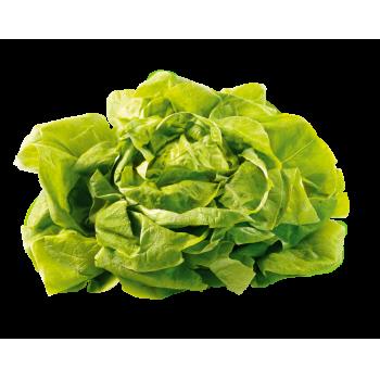 Belgien - Kopfsalat