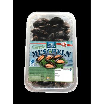 MSC - Muscheln