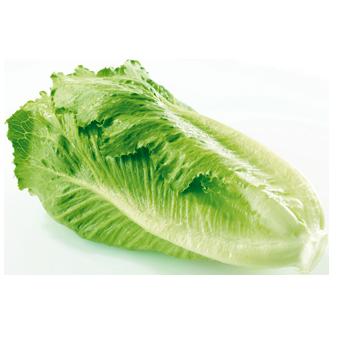 Spanien - EDEKA - Kopfsalat
